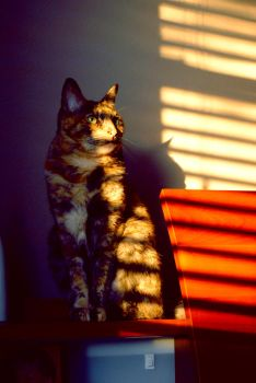My Shadowy Cat. by xRAMENPandAx