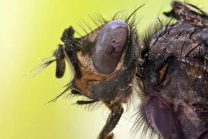 Close-Up Of The Fly by Minigunas