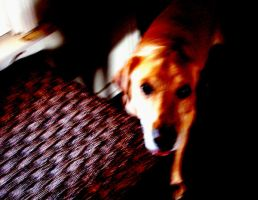 gussie the dog by piesoup