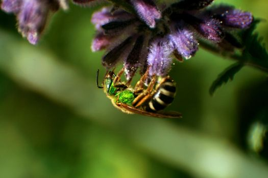Green Bee by LainPanzer
