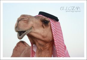 Mr.CAMEL by el-lozah