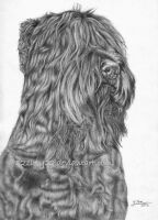 Black Russian Terrier by 22Zitty22