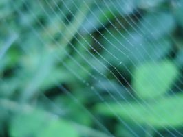 Dew Spider Web by toldeanQ