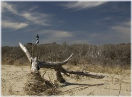Cape Hatteras March 2004 by pewter2k