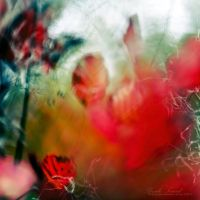 pulpe d'automne II by Basile-Tirard