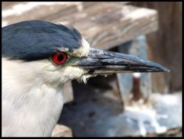 Night Heron by Death-Soldier101