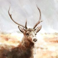 Red deer - scetch by Elruu