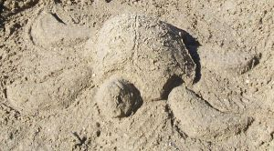 Sand Turtle by Drake09