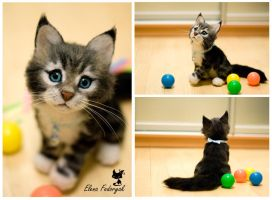 Maine Coon kitten by KittenBlackUA