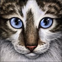 Brown tabby and White Cat by Wynnyelle