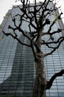 Tree and Skyscrapers by barefootliam