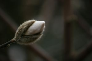 view to bud of magnolia by ingeline-art