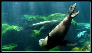 Diving Manatee by hyperteenager