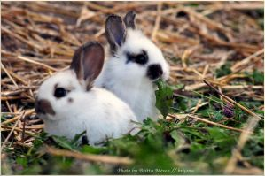 rabbit babies by brijome