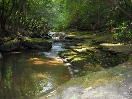 Cloudland Canyon Stream by Eco-Cate