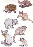 Some Mammals of Tasmania by chikajin