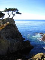 The Lone Cypress by mroyat94