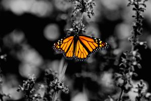 The Butterfly Effect by Bartonbo