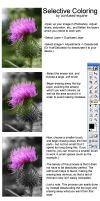 Selective Coloring Tutorial by confused-equine