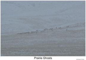 Prairie Ghosts by hunter1828