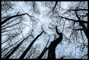 Synapses of Nature by LoganDTR