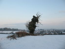 The Lone Tree- Winter by Kerl-of-Fox-County