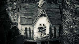 Bird House by Koalaty