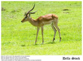 Antelope of Sorts by Della-Stock