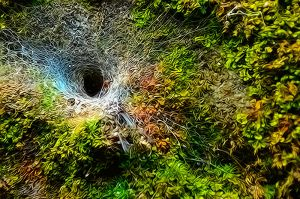 ...spiders hole... by MartenD