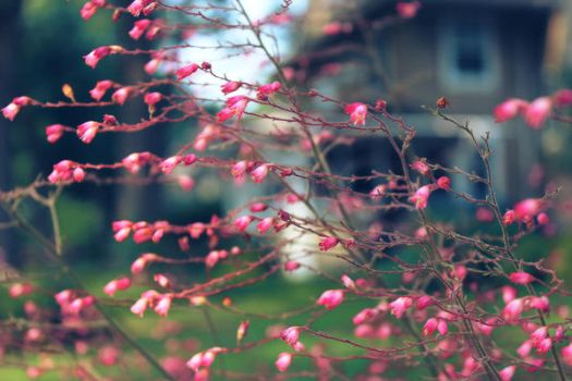 the direction of spring by fotomademoiselle