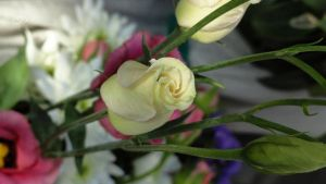 LYSIANTHUS 5 by BELLESYMPHORINE