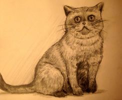 i can haz draw cat by AIEEETHEYGOTFRANK