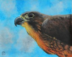Falcon Traditional by Eliket