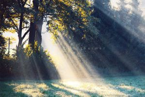 rays of dew by PatrickRuegheimer
