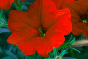 Red Flower by fallingslowly47