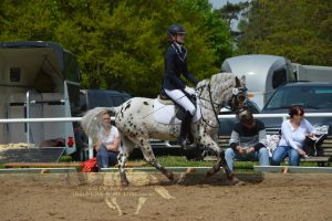 Pony dressage stock 5 by BRls-love-is-MY-Live