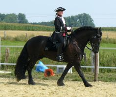 baroque frisian in action by Nexu4