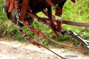 cavalry bridle by silvena
