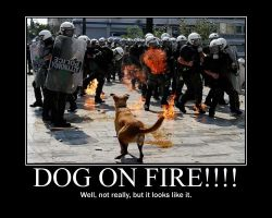 Dog on Fire by Aristodes