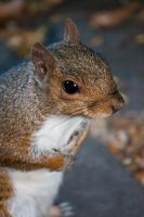 Squirrel 2: Do you have something more for me?? by imaagination