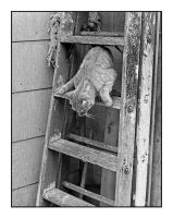Cat On ladder.img466, with story by harrietsfriend
