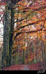 Autumn forest 2015a1  S T O C K by AStoKo by AStoKo