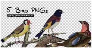 5_bird_pngs_by_vers by vvvers