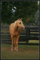 Serenity by Phantom303