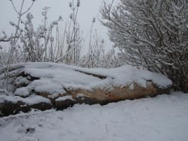Snow Covered Log by AllStock