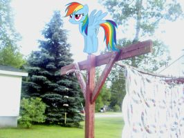 Rainbow Dash on my Clothes Line by Catoz