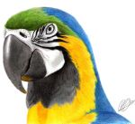 Macaw by rob-powell