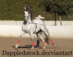 Andalusian 10 by dappledstock