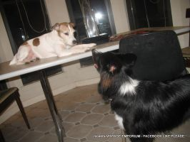 My dogs are dorks by Cierue