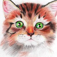Tabby Kitten by x----eLLiE----x